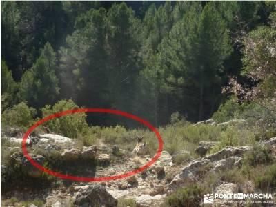 Alto Mijares -Castellón; Puente Reyes; pueblos de madrid embalse viriato pueblos madrid